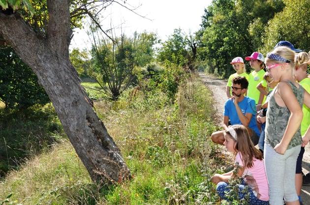Kindergruppe beobachtet Wespen in einem Wespennest am Baum