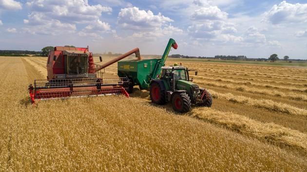 Traktor und Mähdrescher ernten ein Getreidefeld ab