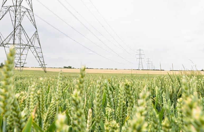 Feld mit Stromleitungen